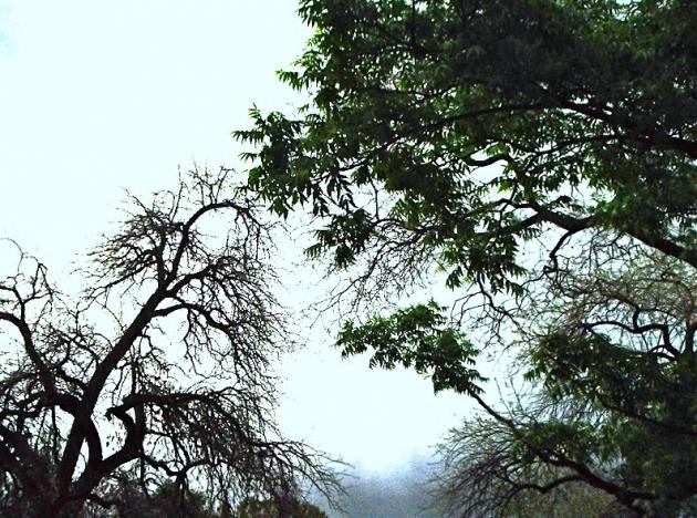 l'évidence et l'énigme du poème de circonstance, ito mikidoka, singe assis dans les champs, japon, handa, livre